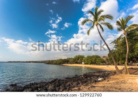 Coconut palm trees at a beach, Big Island, Hawaii - stock photo
