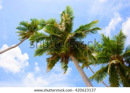 COCONUT PALM TREES , CLEAR BLUE SKY CLOUD BACKGROUND