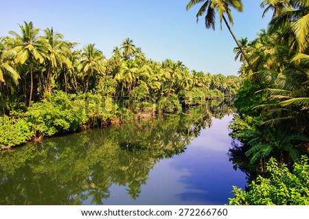 Coconut palm trees growing along the small river, blue sky and bright tropics of India - stock photo