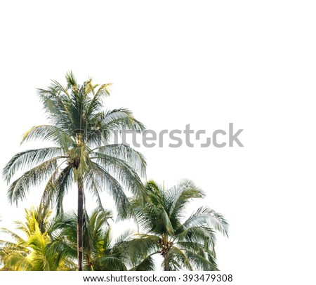Coconut palm trees isolated on white background - stock photo