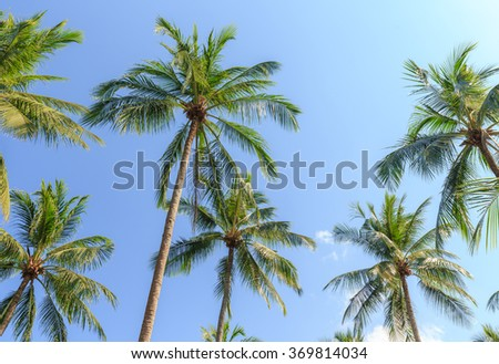 Coconut palm trees on blue sky background