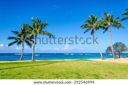 Coconut Palm trees on the sandy Poipu beach in Hawaii, Kauai - stock photo