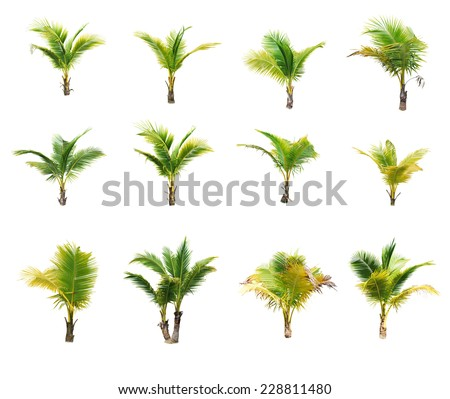 Coconut palm trees on white background  - stock photo