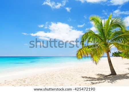 Coconut Palm trees on white sandy beach in Saona island, Dominican Republic