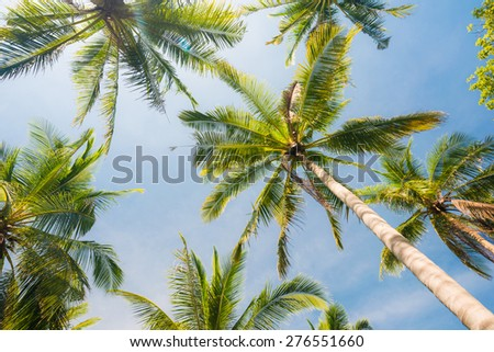 Coconut palm trees perspective view, Landscape in island - stock photo