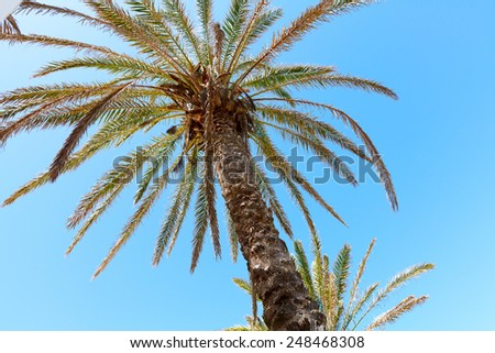 Coconut palm trees perspective view on sky background - stock photo
