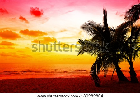 coconut palm trees silhouette at Koh Kood, Thailand