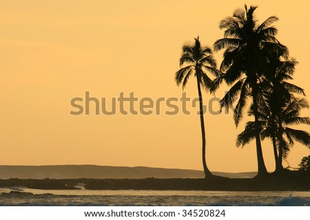 Coconut palm trees silhouetted against orange sunset - stock photo