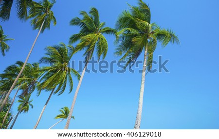 Coconut palm trees - summer - blue sky