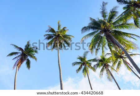 Coconut palm trees - summer - blue sky - stock photo