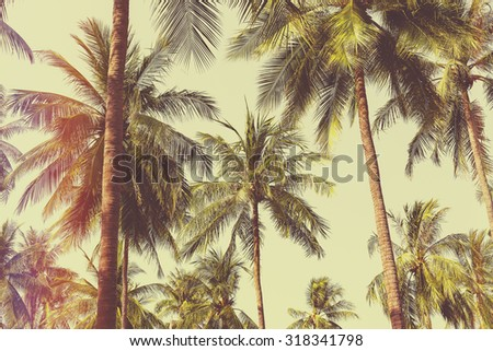 Coconut palm trees with light leak filter - stock photo