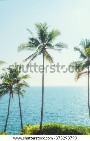 Coconut palms against the backdrop of sky and sea