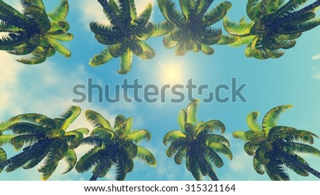 Coconut palms and sun at its zenith - stock photo