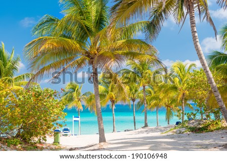 Coconut palms and white sandy beach on a sunny day in Varadero  in Cuba - stock photo