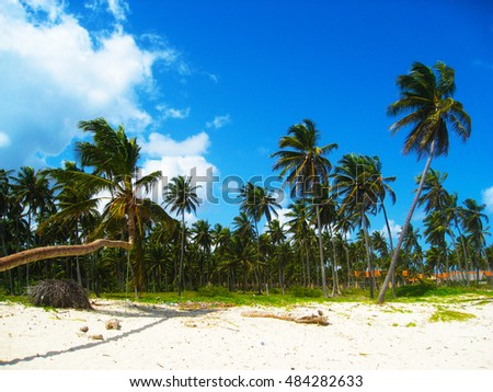 Coconut palms beach on a tropical island. Clear blue water, sand and palm trees.