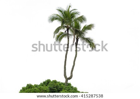 Coconut palms isolated on white background - stock photo