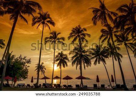 Coconut palms on sand beach in tropic on sunset. Chang island, Thailand