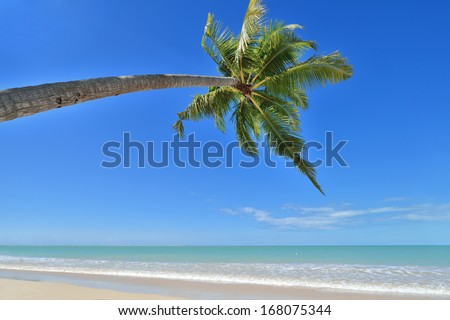 Coconut palms on sand beach in tropical island , day time