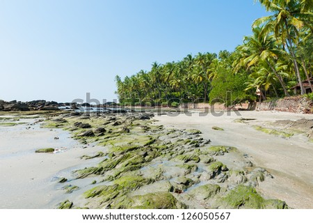 Coconut palms on the amazing tropical beach in India
