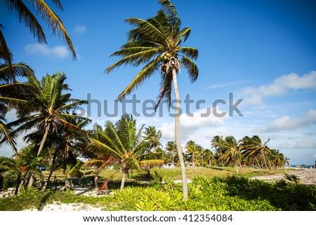 Coconut palms on the ocean, Cuba, Travel, Tropical Climate - stock photo