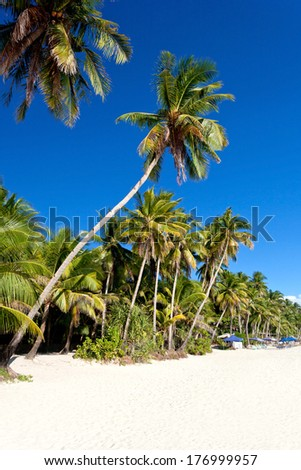 Coconut palms on white sandy beach, nobody. Philippines.