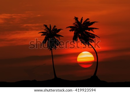 Coconut sun shadow