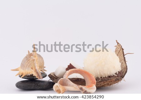 coconut, sweet coconut and shells on white background