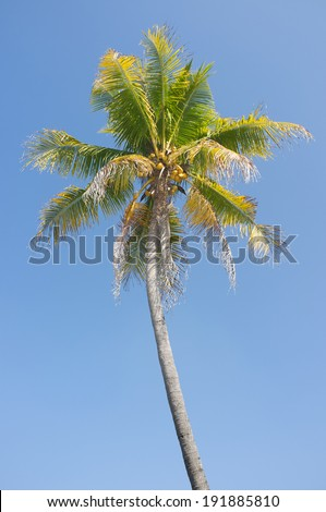 Coconut tree against blue sky - stock photo