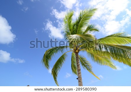 Coconut tree and a blue sky