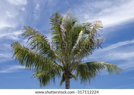 Coconut tree and  blue sky - stock photo