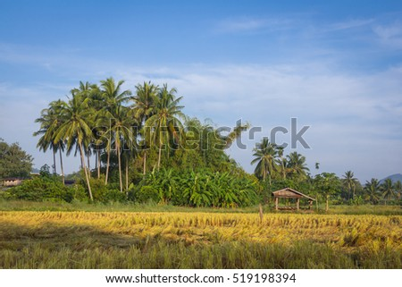 coconut tree and blue sky on background