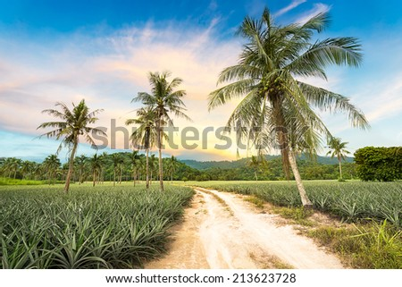 Coconut tree and pineapple in agriculture landscape - stock photo