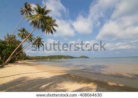 Coconut tree and shadow coconut tree on the tropical beach ,blue sky,thailand island