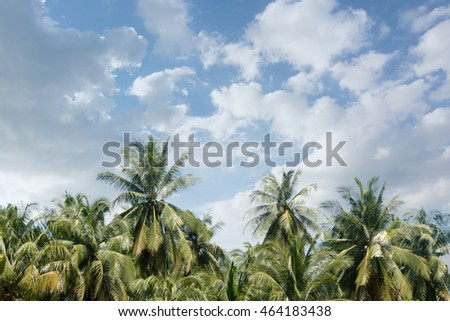 coconut tree and sky in The morning