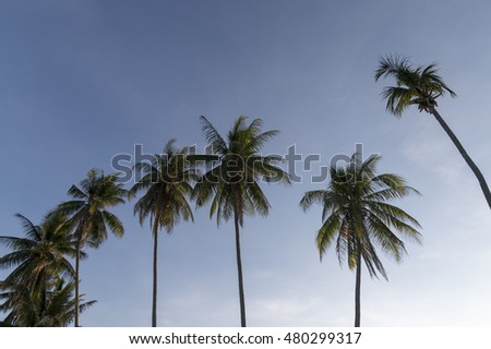 Coconut tree blue sky background