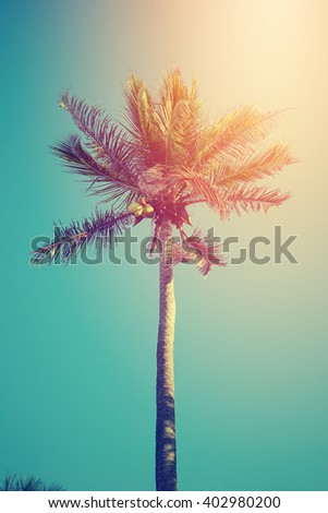 coconut tree in sunny day , retro filter - stock photo