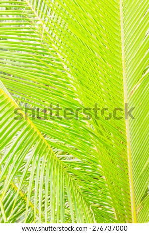 Coconut tree leaf background - stock photo