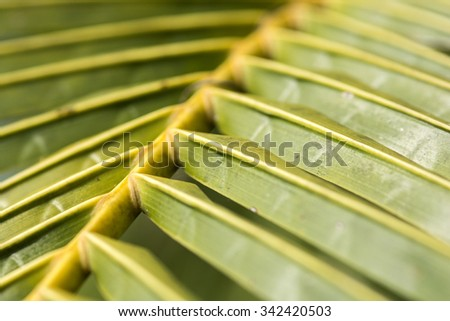 coconut tree leaves beautiful pattern