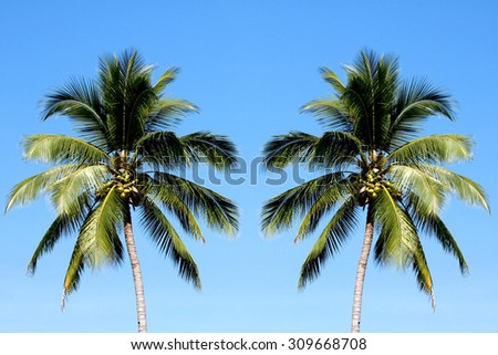 Coconut tree on blue sky