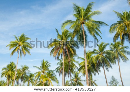 Coconut tree on blue sky in the south of Thailand.