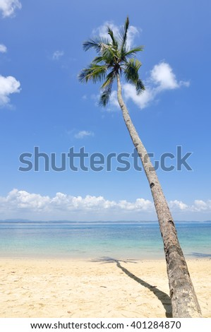 Coconut Tree On Island during Blue Sky