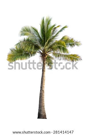 coconut tree on isolated