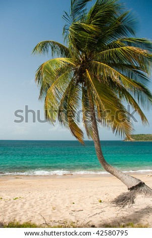 Coconut tree on the bank