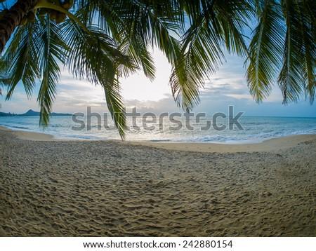Coconut tree on the beach in Koh Samui Thailand - stock photo