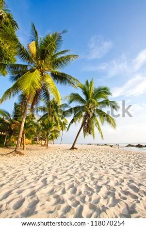coconut tree on the huahin beach, Thailand - stock photo