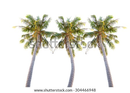 coconut tree on white