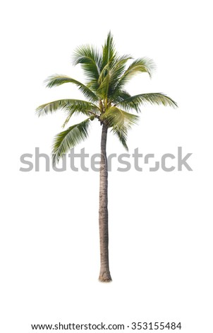 coconut tree on white background