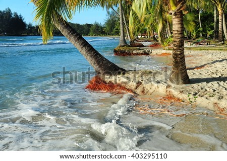 Coconut tree stump with root clump washed up on the beach - stock photo