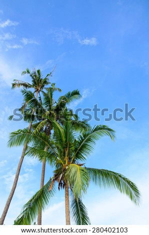 Coconut tree under blue sky