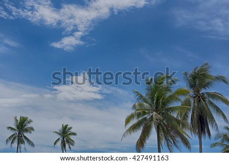 Coconut tree with blue sky background